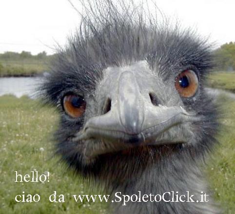 spoleto-struzzo